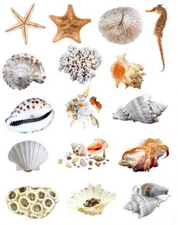 Классификация тварей по палеонтологии