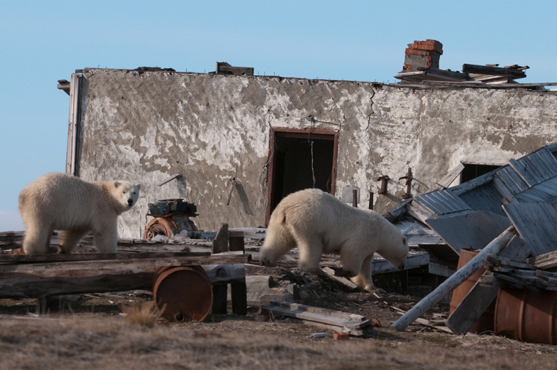 Следы на земле или кто в ответе за нашу Арктику?