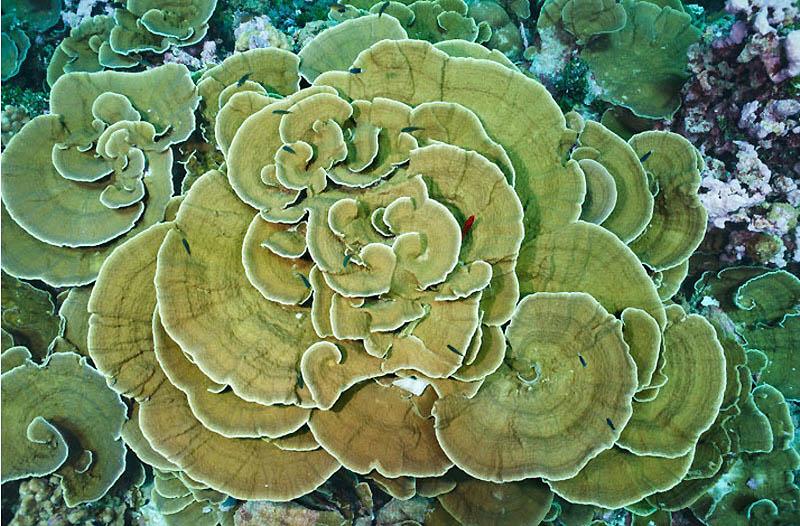Рифы архипелага Феникс