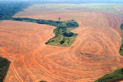 Защита лесов в Доминикане