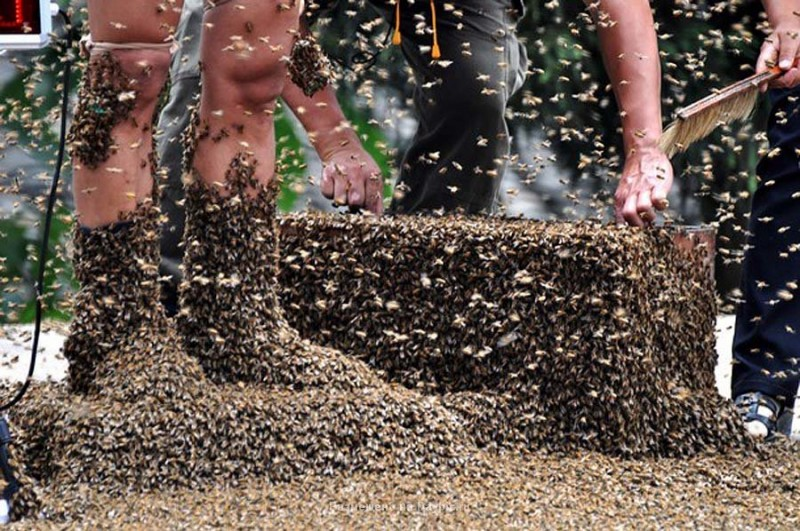 Пчелиное соревнование в Китае