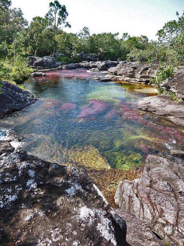 25 фотографий Каньо Кристалес – пятицветной реки