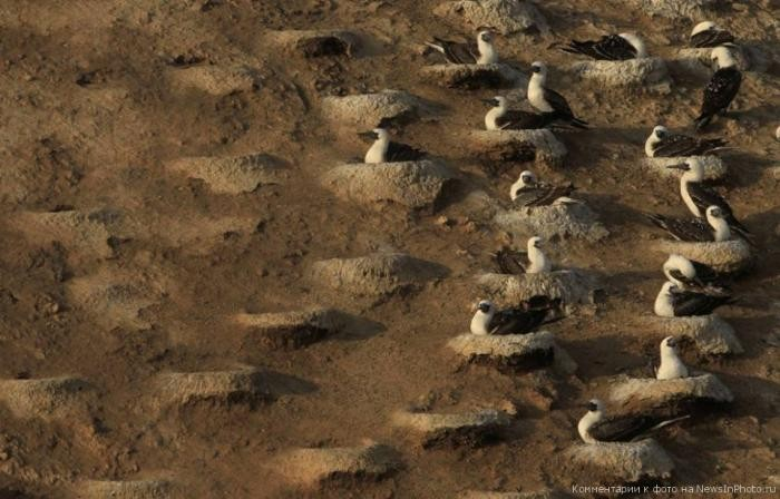 Сбор птичьего помета в Перу