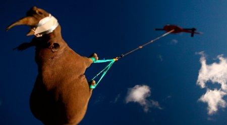 Лучшие фото дикой природы 2011