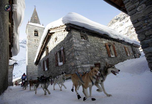 Гонки на собачьих упряжках La Grande Odyssee