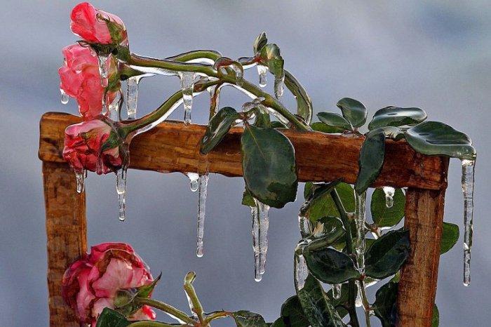 День в фотографиях, 14 февраля 2012