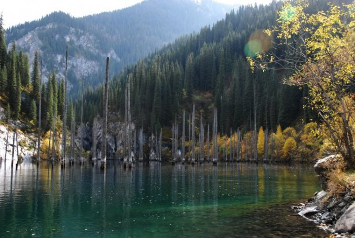 Невероятные затопленные леса