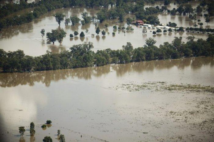 Нашествие пауков после наводнения в Австралии