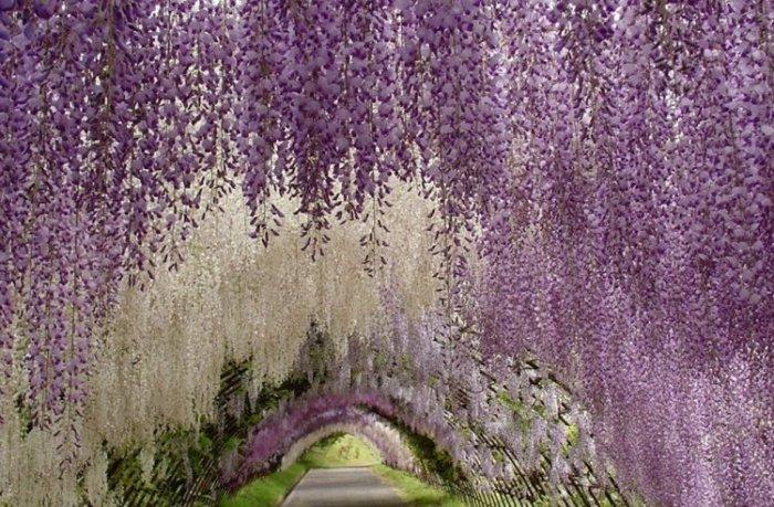 Парк цветов Асикага в японской провинции Точиги на о.Хонсю