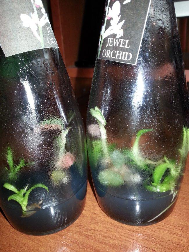Тайская орхидея в бутылке