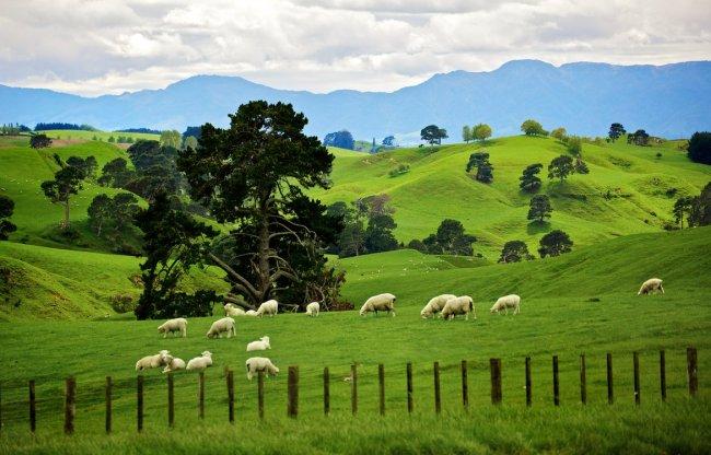 Новая Зеландия – перспективное туристическое направление