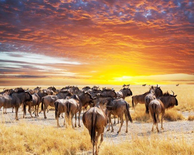 Отдых в Кении: природные красоты Африки