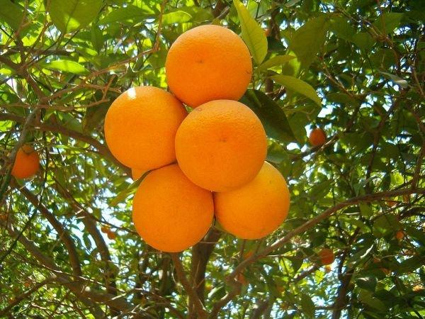 Морокко - это не только апельсины