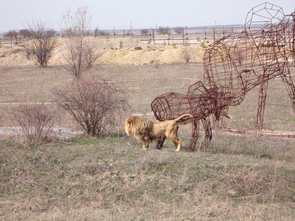 Особенности сафари-парка в Крыму