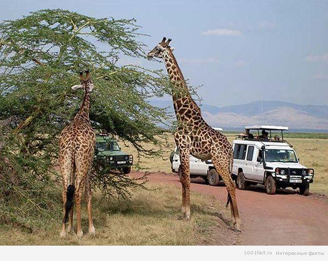 Сафари — незабываемый отдых на природе